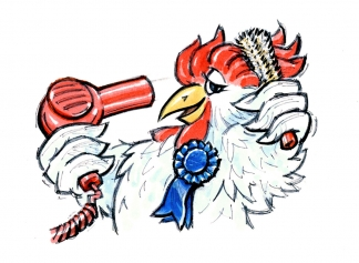 Prize rooster